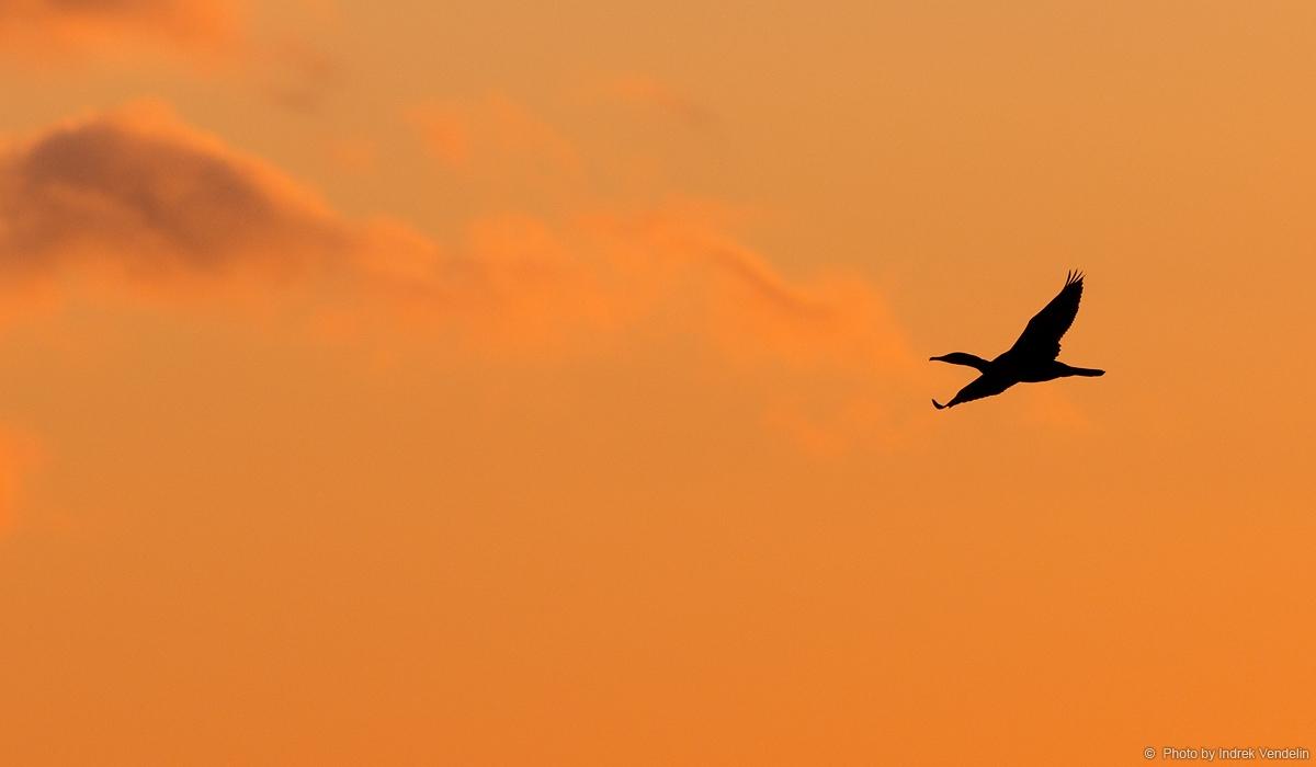 Õhtune lend