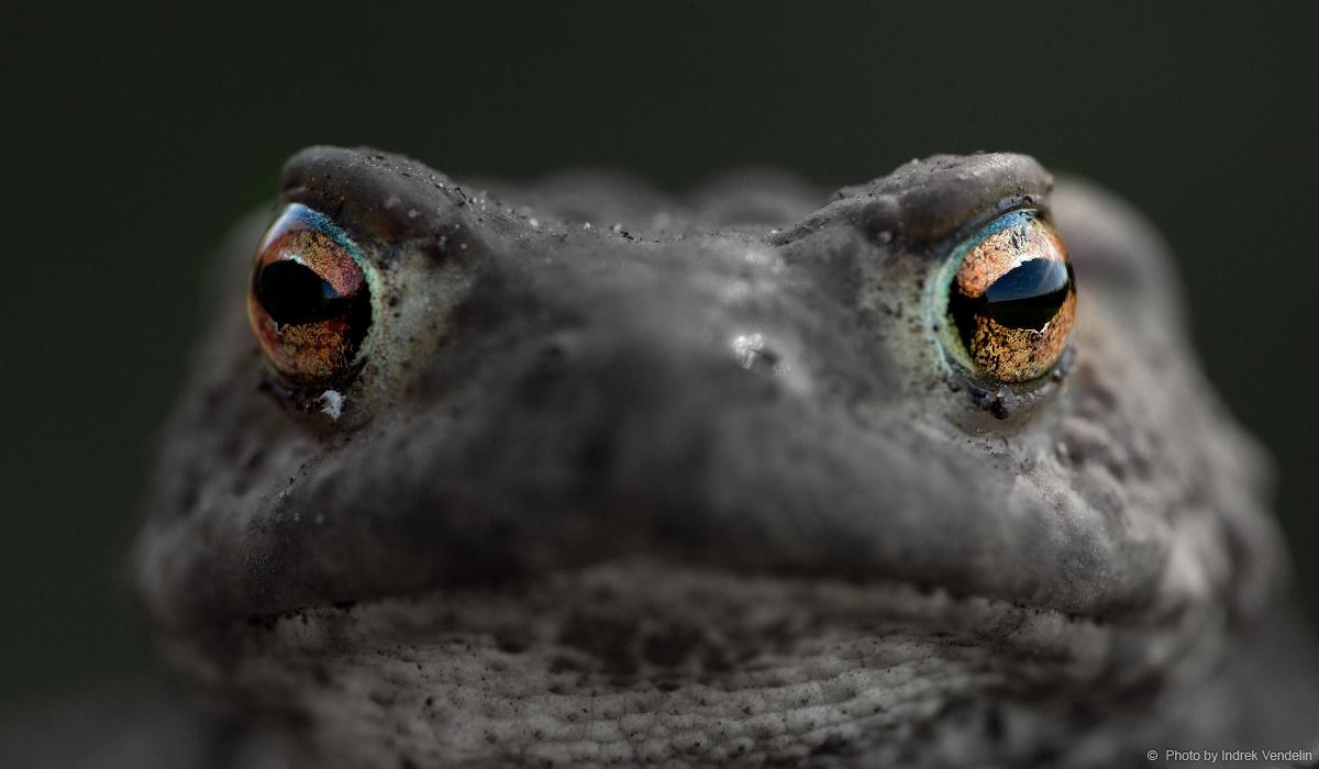 Need silmad