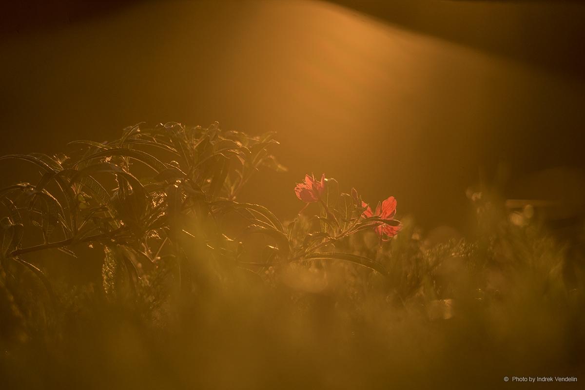 Lilleke kraavis (kiidame Jani ja tema Pentakoni)